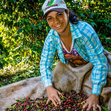 A Brazilian woman harvesting coffee